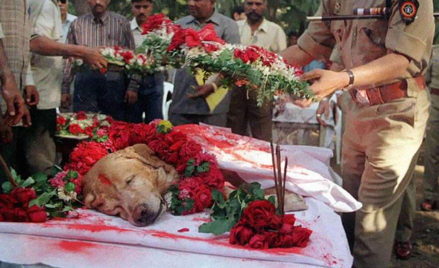 dog Zanjeer in 2000